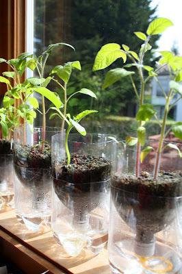 Self watering seed starter