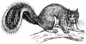 Squirrel_sketch