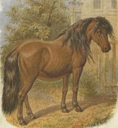horse-images-25