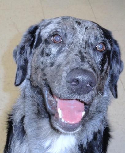 dog-jethro