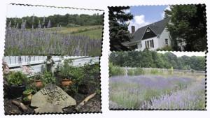 daybreak-lavender-farm
