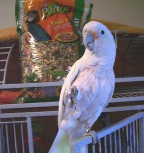 PCPT-bird