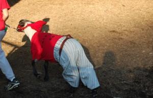 goat costume