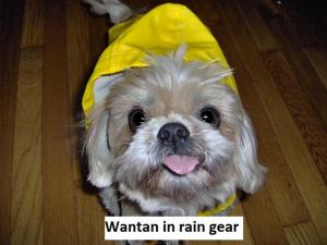 Wantan