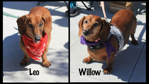 Willow-Leo-feature