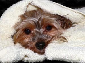 dog-wrapped