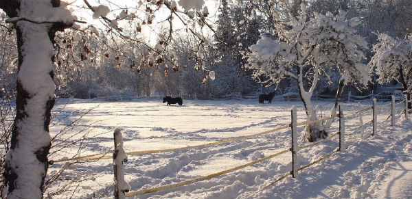 horse-fence