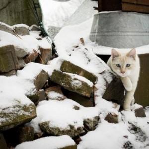 ca-in-Snow