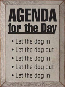 7Dogs-Agenda for the day