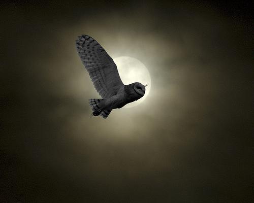 feb-owl-moon
