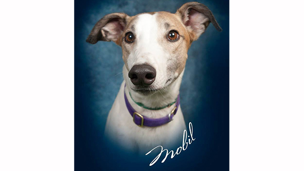 Freedom-Greyhound