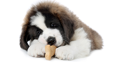 dog-with-treat
