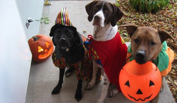 dogs for halloween fB