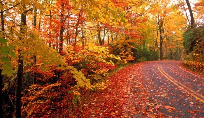 fall foliage fB