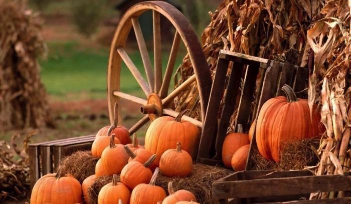 pumpkins FB