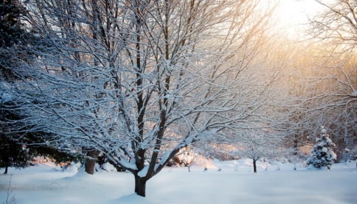 snow_colored FB